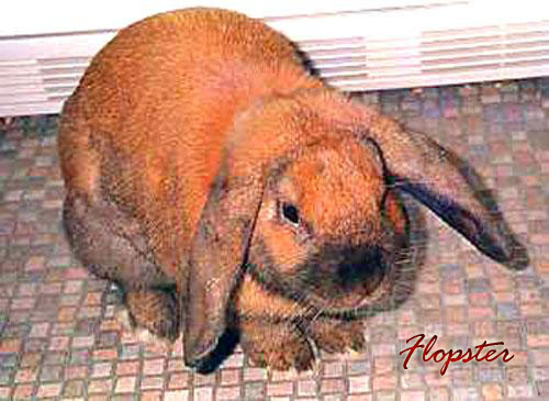 Flopster the Rabbit